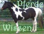 Pferde - Wissenswertes zum Thema Pferd